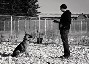 Dog Training Edmonton. Why 780's Dog Training?