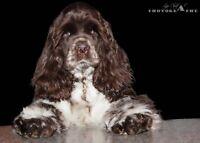 Toilettage - petit chien (20 lb max) À PARTIR DE $25.00
