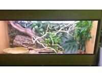 Corn snake, full setup and all decor ******REDUCED PRICE*******