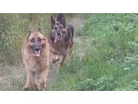 Professional Insured Dog Walker Pet Care Services