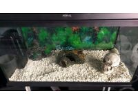 Aquael Classic 80 tank and stand. Includes fluval U3 filter and decorations.