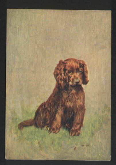 Sussex Spaniel Tobacco card postcard dogs 1930
