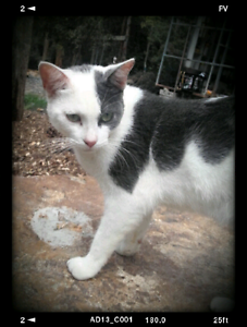 Needs a home harley the cat Yandina Maroochydore Area Preview