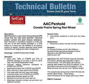 Penhold wheat seed CPS class - Certified