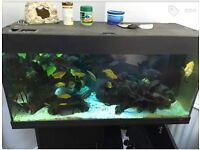 Juwel 180l tank and stand £70