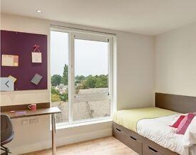 En Suite room to rent