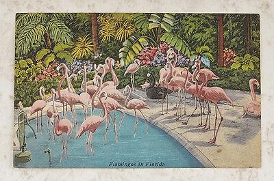 Large Group FLAMINGOES ~Tropical Setting Pool ~ Rare Bird Farm MIAMI ~ Linen EUC