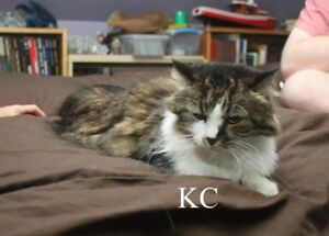 KC and Spencer - Two older cats needing a home