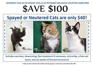 Save $100 on cat adoptions at PetSmart for Quinte Humane Society