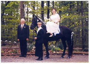 Experienced wedding horse and pony, astride, side-saddle, cart