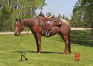 Red Roan 3 year old cowhorse prospect