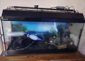 Fish tank set up.