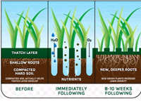 Professional Affordable Lawn Aeration