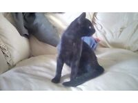2 Female Kittens Born 2nd April Ready to go asap