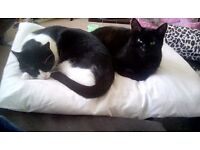 Two, free, inside cats. Spayed /vaccinated. Looking for loving,forever home.