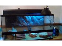 Large reptile tank with accessories and uv bulb