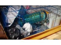 2 male pet rats one black one white