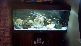For sale jewel fishtank
