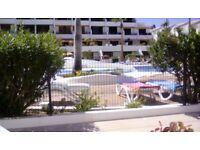 Tenerife, poolside apt playa de las Americas