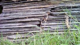 Reclaimed Delabole Slates & Ridge Tiles