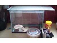 Silver fish with filter , food and tank for £15