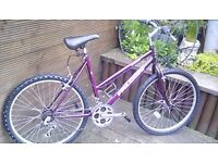 ADULT LADIES FALCON ORCHID MOUNTAIN BIKE WITH 18 GEARS