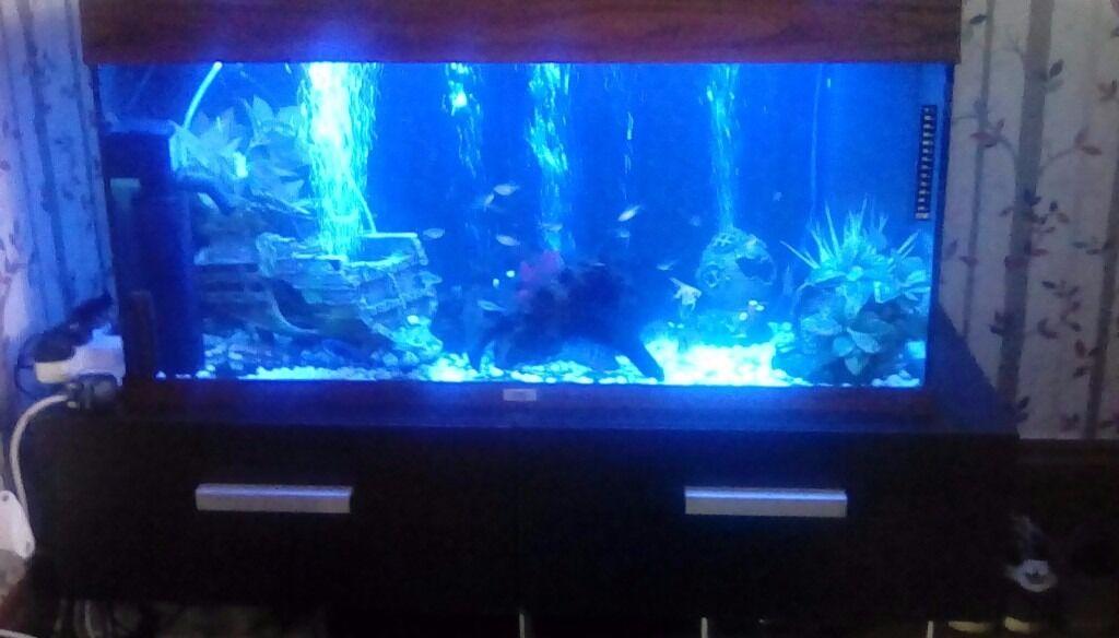 250 litre Juwel fish tank