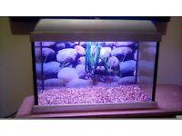 Fish tank with light