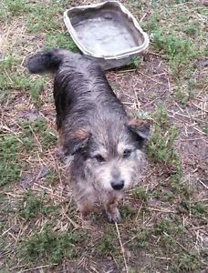 Satch is Looking for a Foster or Foster to Adopt Home!