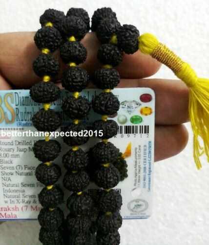 RARE Black 7 Mukhi Rudraksha Mala Seven Face Rudraksh Rosary Java Bead Certified