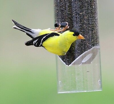 3 lbs Gold Finch & Song Bird Thistle Bird Seed Free Shipping!!!