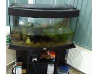Beautiful Aquarium with free fish