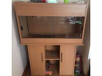 Immaculate Vivarium and Stand for Bearded Dragon