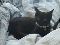 5 month old Kitten