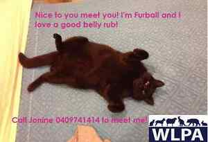 Furball loves a good belly rub! (WLPA) Newtown Inner Sydney Preview