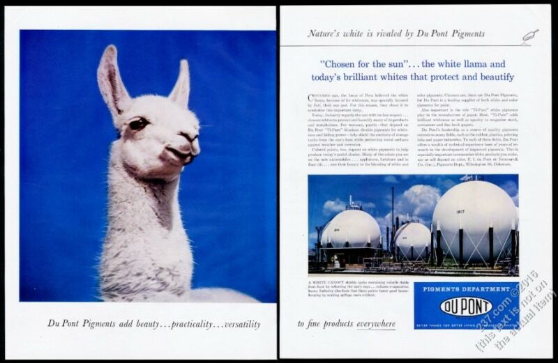 1957 llama photo Du Pont pigments vintage print ad