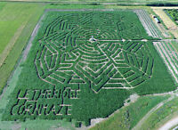 """'Get Lost"""" at the Lethbridge Cornmaze"""