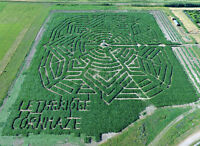 """Get Lost"" at the Lethbridge Cornmaze!"
