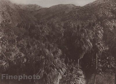 1900/72 Photo Gravure NATIVE AMERICAN INDIAN Landscape Palms EDWARD CURTIS 11x14