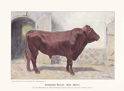 Schlesisches Rotvieh Bulle Moritz FARBDRUCK 1925 Reprin