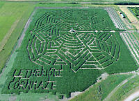 """Get Lost"" at the Lethbridge Cornmaze"