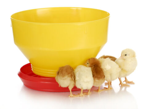 How to Buy the Right Feeders for Your Chickens