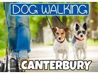 Need a friendly dog walker? Canterbury Area | 1st Walk FREE!
