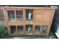 2 tier hutch and 2 lionhead rabbits
