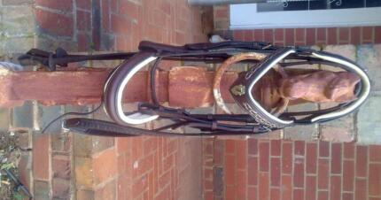 Dressage Bridles For Sale Full Size Creswick Hepburn Area Preview