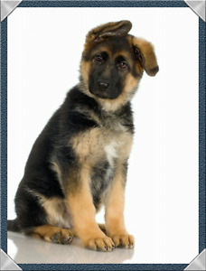 WANTED PUPPY OR OLDER DOG