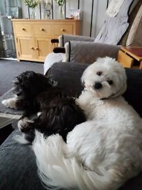 Two lovely young dogs for sale