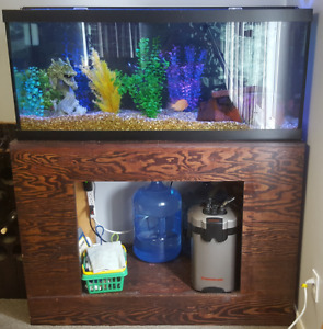 2 Red Parrots, 1 African and 1 Pleco with 75 Gallon tank + stand