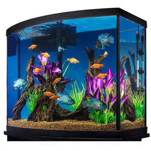 Wanted 26-50 Gallon aquarium and all accessories