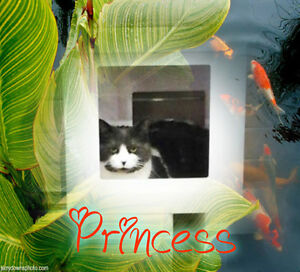 Pretty Princess is looking for her Forever Family. Carma Moncton